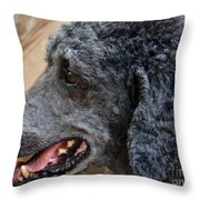 Eye On The Cat Throw Pillow