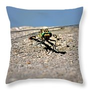 Eye To Eye With A Dragonfly Throw Pillow