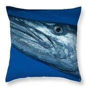 Facial View Of A Great Barracuda, Kimbe Throw Pillow