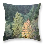 Fall Color In The Trees Throw Pillow