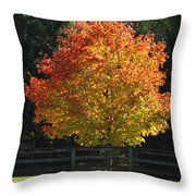 Fall Colored Tree Throw Pillow