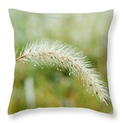 Fall Foxtail Throw Pillow
