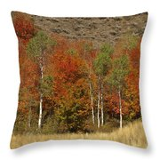 Fall In Snake River Canyon Throw Pillow