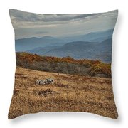 Fall Scene On Whitetop Mountain Va Throw Pillow