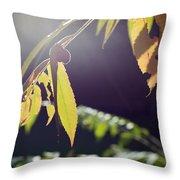 Fall Sumac Throw Pillow