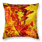Fallen Autumn Maple Leaves  Throw Pillow