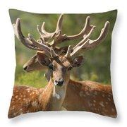 Fallow Deer Dama Dama Stags Throw Pillow