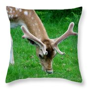 Fallow Deers Lunchtime Throw Pillow