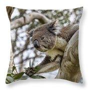 Favorite Treat Throw Pillow by Douglas Barnard