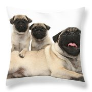 Fawn Pugs, Mother And Pups Throw Pillow
