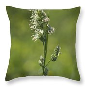 Feathery Reed Canary Grass Vignette Throw Pillow
