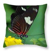 Feeding Butterfly Throw Pillow