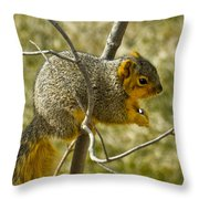 Feeding Tree Squirrel Throw Pillow