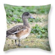 Female American Wigeon  Throw Pillow