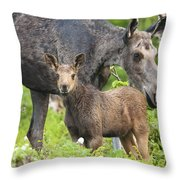 Female And A Three Weeks Old Moose Throw Pillow