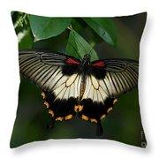 Female Asian Swallowtail Butterfly Throw Pillow