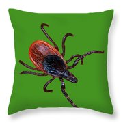 Female Blacklegged Tick Throw Pillow