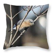 Female Bluebird Throw Pillow