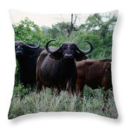 Female Cape Buffalo Syncerus Caffer Throw Pillow