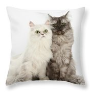 Female Cats Throw Pillow