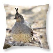 Female Gambel's Quail  Throw Pillow