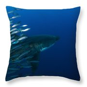 Female Great White Shark With A School Throw Pillow