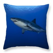 Female Great White With Remora Throw Pillow