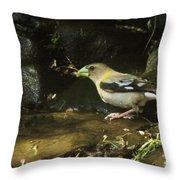 Female Grossbeak Throw Pillow
