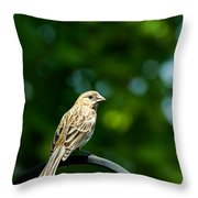 Female House Finch Perched Throw Pillow