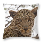 Female Leopard Close-up Throw Pillow