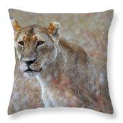 Female Lion Portrait Throw Pillow
