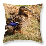 Female Mallard On A River Bank In Alaska Throw Pillow