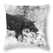 Female Moose In Snowy Forest, Gaspesie Throw Pillow
