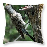 Female Northern Flicker Colaptes Throw Pillow