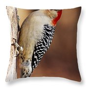 Female Red-bellied Woodpecker 5 Throw Pillow