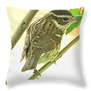 Female Red Breasted Grossbeak Throw Pillow