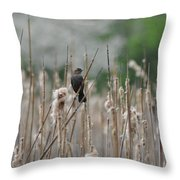 Female Redwinged Blackbird Throw Pillow
