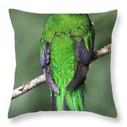 Female Resplendent Quetzal - Dp Throw Pillow