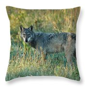 Femle Gray Wolf In The Morning Light Throw Pillow