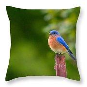 Fence Post Bluebird Throw Pillow