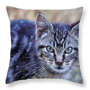 Feral Kitten Throw Pillow