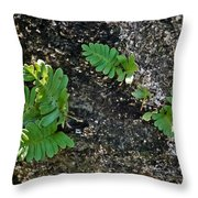 Fern And Coquina Throw Pillow