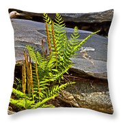 Fern And Rocks Throw Pillow