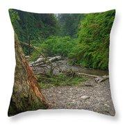Fern Canyon Trunk Throw Pillow