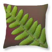 Fern Detail Throw Pillow