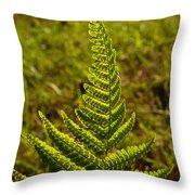 Fern Frond And Sporangia 1 Throw Pillow