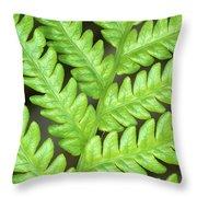 Fern Frond, Detail, Big Island, Hawaii Throw Pillow