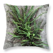 Fern Growing From Crack In Limestone Throw Pillow