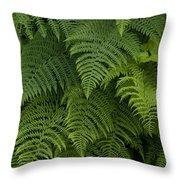Fern Leaves At Valdez, Alaska Throw Pillow