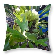 Fern With Blue Bucket Throw Pillow